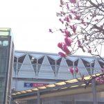 春の訪れを感じる守谷駅前