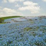青い丘に行ってきました。